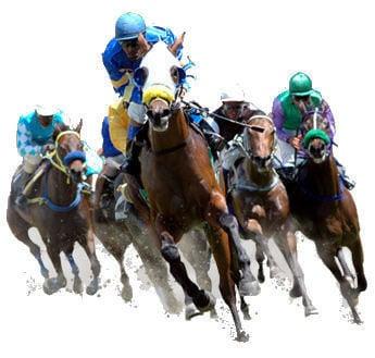 """Résultat de recherche d'images pour """"images chevaux de courses"""""""