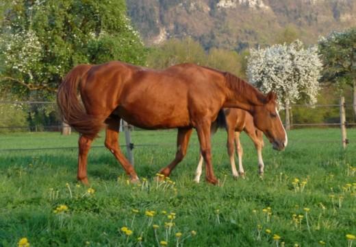 Acheter son cheval : les questions préalables