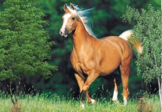 Le prix des chevaux