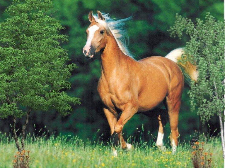 prix-cheval